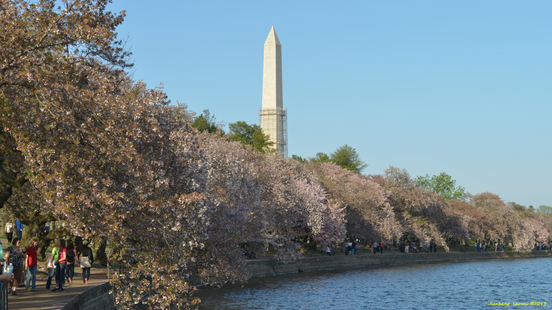 Cherry Blossom under Sunset 3, W Tidal Basin