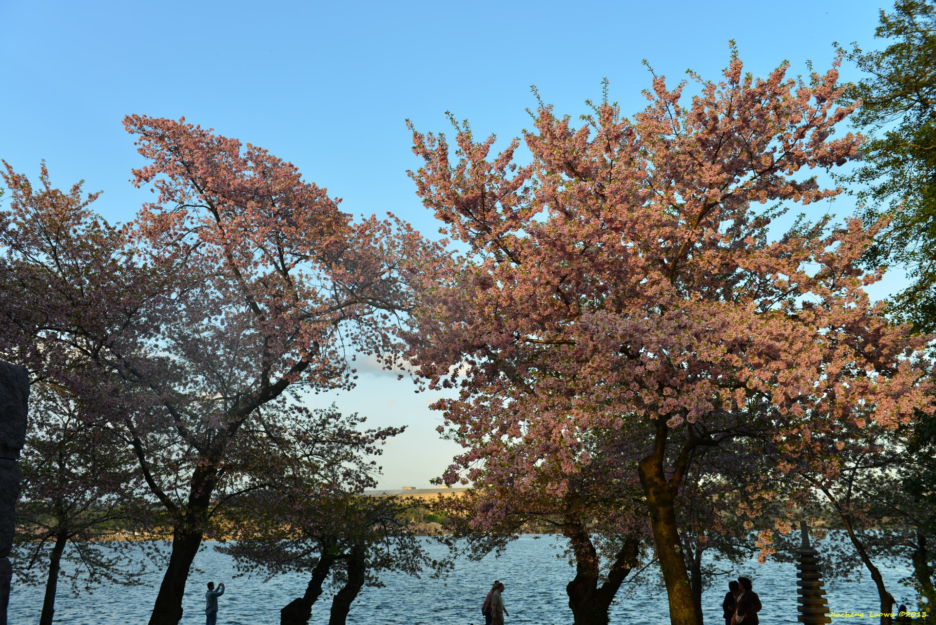 Cherry Blossom vs Lake, SW Tidal Basin