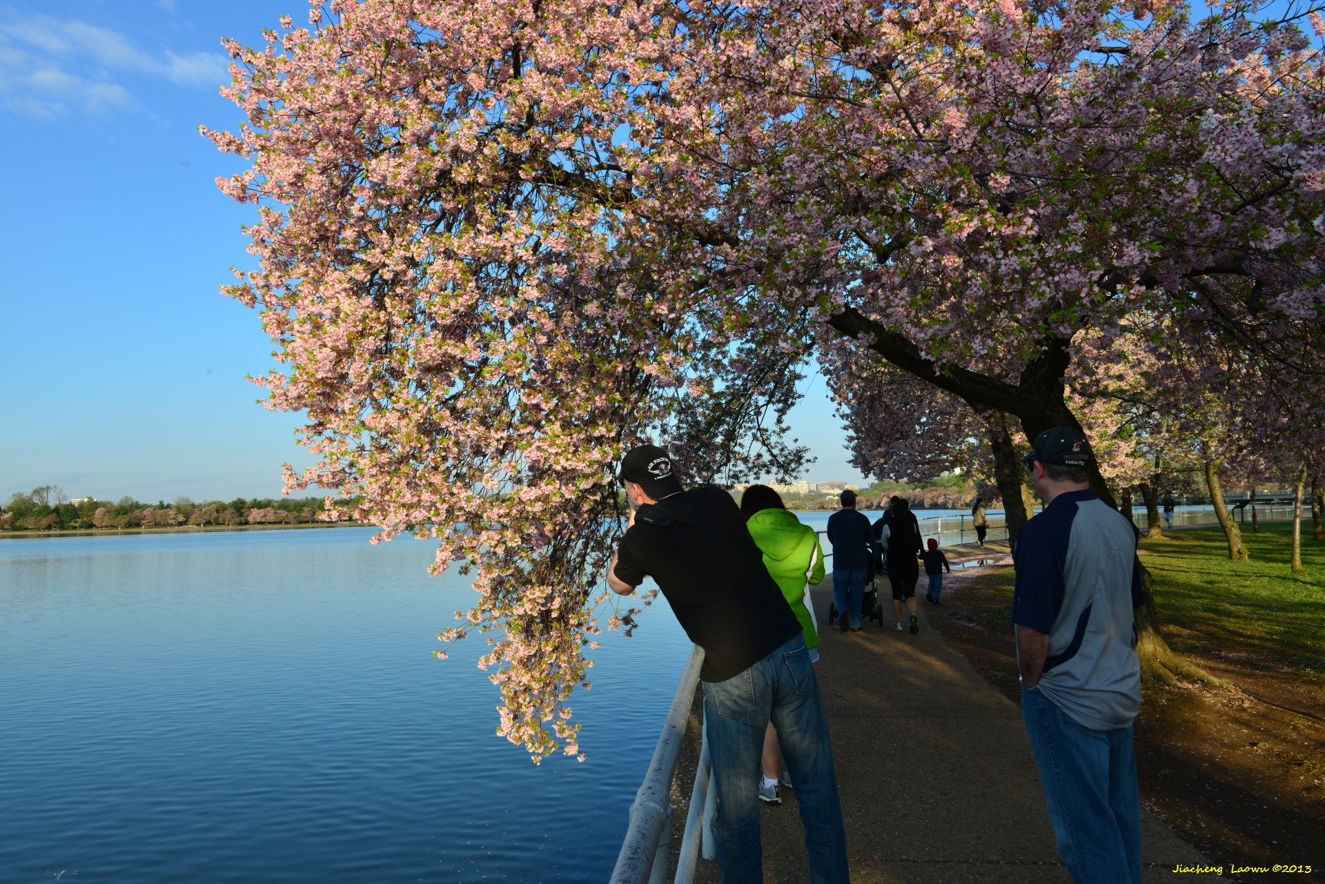 Cherry Blossom under Morning Sun 5, NE Tidal Basin